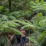 C-Australia Rainforest
